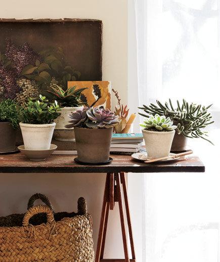 cacti-succulents_gal